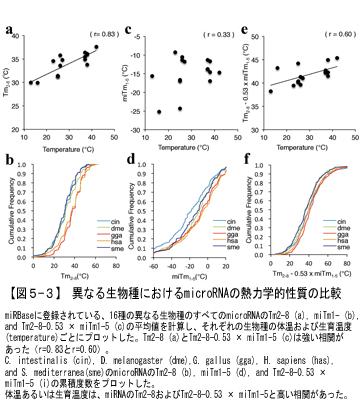 異なる生物種におけるmicroRNAの熱力学的性質の比較
