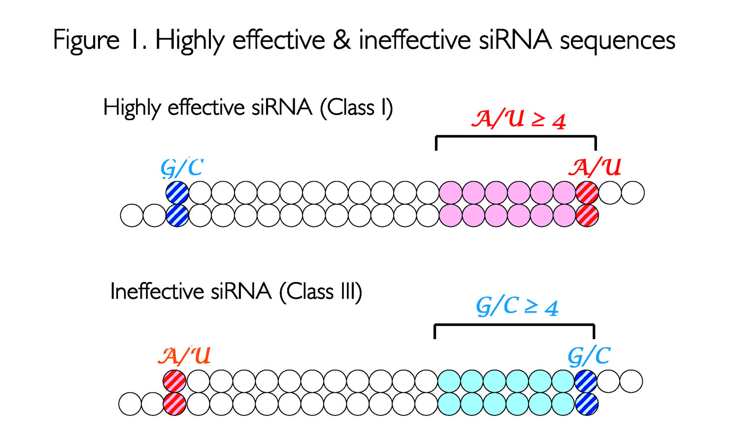 High effectvive & ineffective siRNA sequences