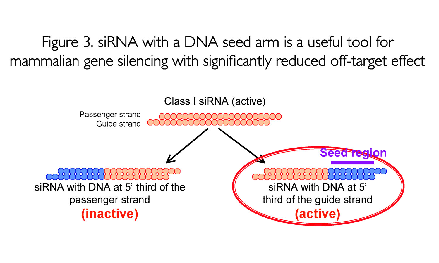 siRNA with a DNA seed arm