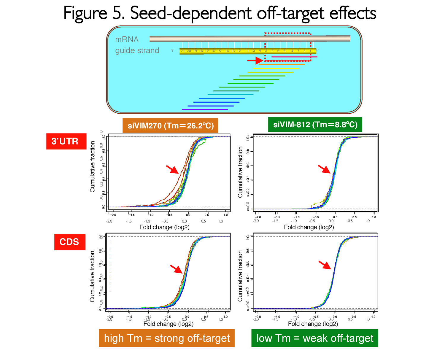 Seed-dependent off-target effect