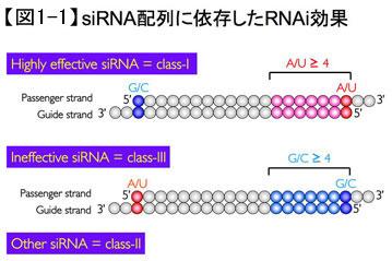 siRNA配列に依存したRNAi効果
