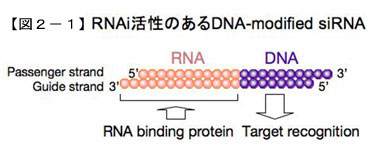 RNAi活性のあるDNA-modified siRNA